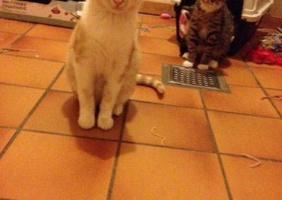 Otto og Bodil